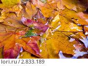 Осенние листья. Стоковое фото, фотограф Романенко Юлия Игоревна / Фотобанк Лори