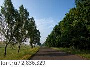 Купить «Дорога в сельской местности, уходящая вдаль», фото № 2836329, снято 14 июня 2011 г. (c) Dmitry S. Marshavin / Фотобанк Лори