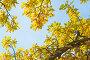 Ветви дуба осенью на фоне неба, фото № 2842137, снято 2 октября 2011 г. (c) Игорь Соколов / Фотобанк Лори