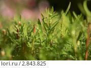 Роса. Стоковое фото, фотограф Андрей Пех / Фотобанк Лори