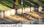 Купить «Пожилая женщина кормит уток», видеоролик № 2845065, снято 5 октября 2011 г. (c) Сергей Лаврентьев / Фотобанк Лори