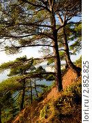 Купить «Осенний пейзаж с соснами», фото № 2852825, снято 7 октября 2011 г. (c) Игорь Архипов / Фотобанк Лори