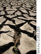 Купить «Растрескавшаяся земля», фото № 2853253, снято 9 мая 2010 г. (c) Светлана Полушкина / Фотобанк Лори