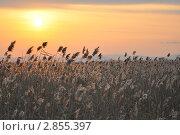 Закат над полем. Стоковое фото, фотограф Александр Романов / Фотобанк Лори
