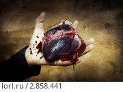 Купить «Сердце в руке», фото № 2858441, снято 24 августа 2011 г. (c) katalinks / Фотобанк Лори
