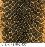 Кожа змеи. Стоковое фото, фотограф Свистунов Павел / Фотобанк Лори