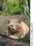 Рыжий кот. Стоковое фото, фотограф Яна Харламова / Фотобанк Лори