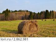 Сноп сена на поле. Стоковое фото, фотограф Мария Кобылина / Фотобанк Лори