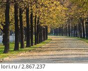 Липовая аллея в октябре, эксклюзивное фото № 2867237, снято 8 октября 2011 г. (c) Алёшина Оксана / Фотобанк Лори