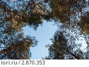 Хвойный лес. Стоковое фото, фотограф Александр Котов / Фотобанк Лори