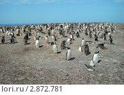 Колония пингвинов в летний день. Стоковое фото, фотограф Leksele / Фотобанк Лори