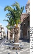 Пальмы вдоль улицы. Старая церковь. Италия (2007 год). Стоковое фото, фотограф Марина / Фотобанк Лори