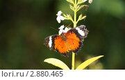 Бабочка в Сингапуре. Стоковое фото, фотограф Вадим Иванов / Фотобанк Лори
