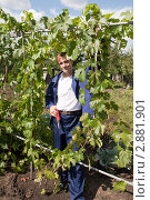 Купить «Дачник на своем участке», фото № 2881901, снято 11 сентября 2011 г. (c) Галина Лукьяненко / Фотобанк Лори