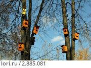 Цветные скворечники на деревьях. Стоковое фото, фотограф Геннадий чупругин / Фотобанк Лори