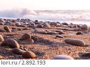 Морской берег. Стоковое фото, фотограф Вера Папиж / Фотобанк Лори
