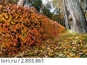 Осенние кусты в парке (2009 год). Стоковое фото, фотограф Екатерина Егоркина / Фотобанк Лори