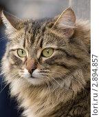 Кошка. Стоковое фото, фотограф Давыдов Юрий / Фотобанк Лори