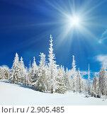 Купить «Снежный пейзаж», фото № 2905485, снято 8 марта 2010 г. (c) Юрий Брыкайло / Фотобанк Лори