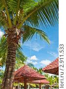 Пальма. Стоковое фото, фотограф igor faustov / Фотобанк Лори