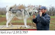 Купить «Мужчина играет с собакой», видеоролик № 2913797, снято 30 октября 2011 г. (c) Сергей Лаврентьев / Фотобанк Лори