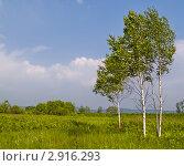 Купить «Летний пейзаж с березами на лугу», фото № 2916293, снято 18 июня 2011 г. (c) Олег Рубик / Фотобанк Лори