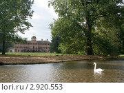Лебедь. Стоковое фото, фотограф Сергей Рагулин / Фотобанк Лори