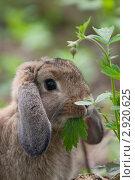 Кролик. Стоковое фото, фотограф Сергеева Юлия / Фотобанк Лори