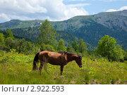 Купить «Лошади в горах. Алтай», фото № 2922593, снято 16 июля 2011 г. (c) Яков Филимонов / Фотобанк Лори