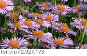 Бабочка на цветах. Стоковое видео, видеограф Светлана Полушкина / Фотобанк Лори