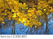 Жёлтые листья над синей водой. Стоковое фото, фотограф Евгений Потькало / Фотобанк Лори