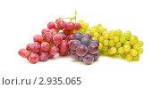 Купить «Виноград», фото № 2935065, снято 23 июля 2019 г. (c) Ласточкин Евгений / Фотобанк Лори