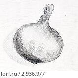 Купить «Лук репчатый. Рисунок графитовым карандашом.», иллюстрация № 2936977 (c) Olga Nikolaeva / Фотобанк Лори