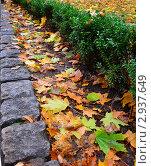 Цвета осени. Стоковое фото, фотограф Ирина Носенко / Фотобанк Лори