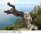 Морской пейзаж с сухим деревом. Стоковое фото, фотограф Дмитрий Журавлев / Фотобанк Лори