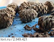 Кедровые шишки. Стоковое фото, фотограф Olga Shemyakina / Фотобанк Лори