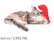 Купить «Голубокремовый с белым котенок в шапке Санта-Клауса», фото № 2953745, снято 9 ноября 2011 г. (c) Irina Danilova / Фотобанк Лори