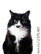 Купить «Злой кот», эксклюзивное фото № 2970481, снято 14 ноября 2011 г. (c) Куликова Вероника / Фотобанк Лори