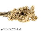 Купить «Лекарственные травы, тысячелистник (Achillea)», фото № 2970661, снято 27 августа 2011 г. (c) Артем Поваров / Фотобанк Лори