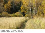 Осенний пейзаж. Стоковое фото, фотограф Natalya Sidorova / Фотобанк Лори