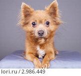 Купить «Портрет собаки», эксклюзивное фото № 2986449, снято 19 сентября 2018 г. (c) Яна Королёва / Фотобанк Лори