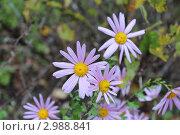 Последние цветы в саду. Стоковое фото, фотограф Андрей Тунев / Фотобанк Лори