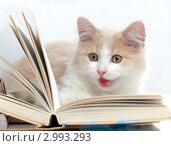 Купить «Маленький рыжий с белым котенок с книгами», фото № 2993293, снято 14 сентября 2011 г. (c) Маргарита Бородина / Фотобанк Лори