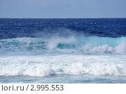 Купить «Красивый гребень океанской волны», фото № 2995553, снято 24 ноября 2011 г. (c) Татьяна Кахилл / Фотобанк Лори