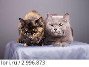 Купить «Кошки», эксклюзивное фото № 2996873, снято 15 ноября 2018 г. (c) Яна Королёва / Фотобанк Лори