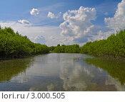 Купить «Река в летний солнечный день», фото № 3000505, снято 5 июня 2011 г. (c) Олег Рубик / Фотобанк Лори