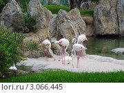 Фламинго в биопарке, Валенсия. Стоковое фото, фотограф Татьяна Королева / Фотобанк Лори