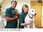 Купить «Ветеринары с собакой и кошкой в клинике», фото № 3075981, снято 17 ноября 2005 г. (c) Monkey Business Images / Фотобанк Лори
