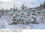 Купить «Молодые сосны занесённые снегом», эксклюзивное фото № 3082277, снято 24 декабря 2011 г. (c) Елена Коромыслова / Фотобанк Лори