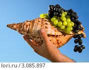 Купить «Рог изобилия», фото № 3085897, снято 17 октября 2011 г. (c) Аnna Ivanova / Фотобанк Лори